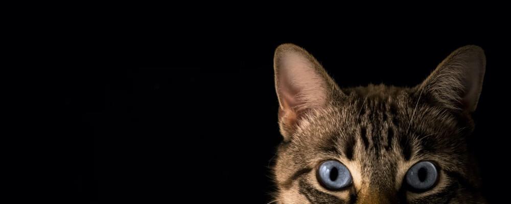 Kattenbak verschonen & schoonmaken