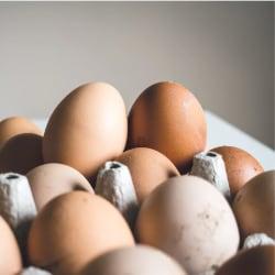 gekookte eieren bewaren