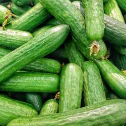 komkommer bewaren