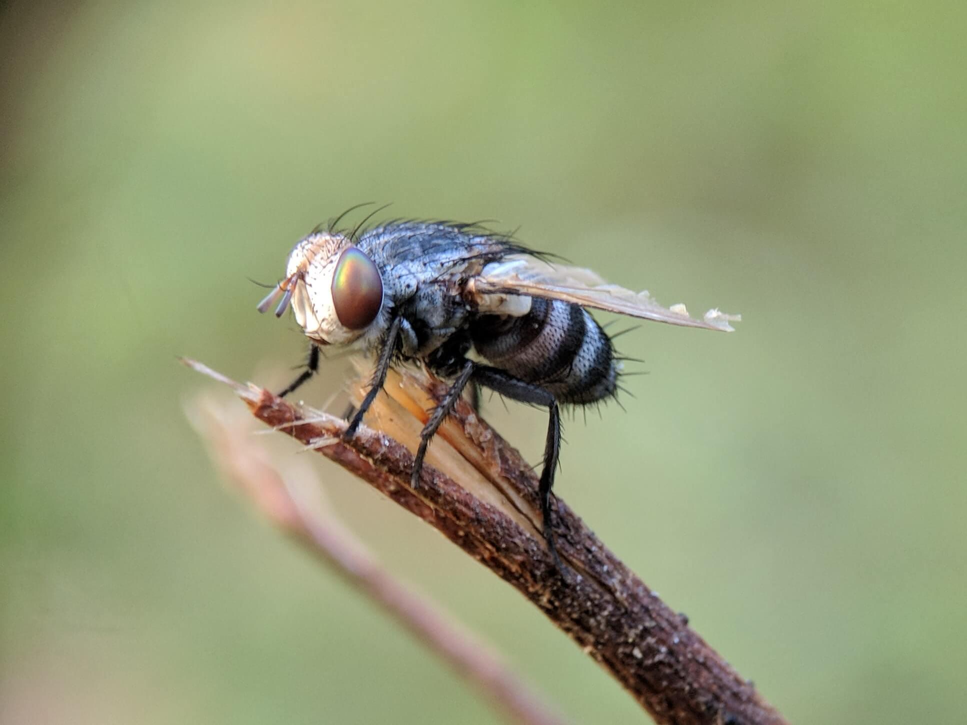 Vliegen in huis verjagen