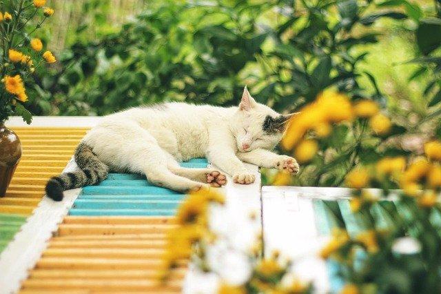 Kattenharen verwijderen (kleding, bank, vloer)