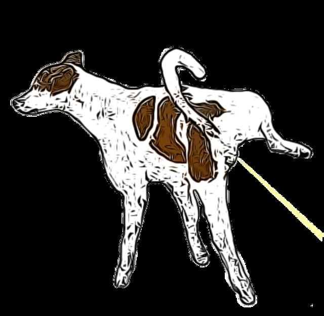 Urinegeur verwijderen (honden, katten en muizenurine)